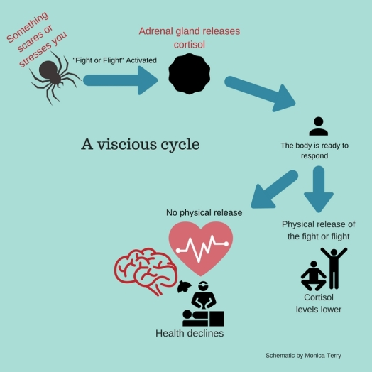 Stress and Cortisol Cycle